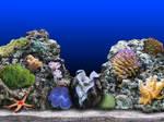 IXNAYs reef