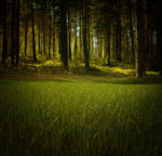3D Parallax Forest Animation GIF