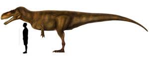 Torvosaurus tanneri (Holotype specimen)