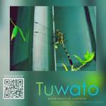 Tuwato