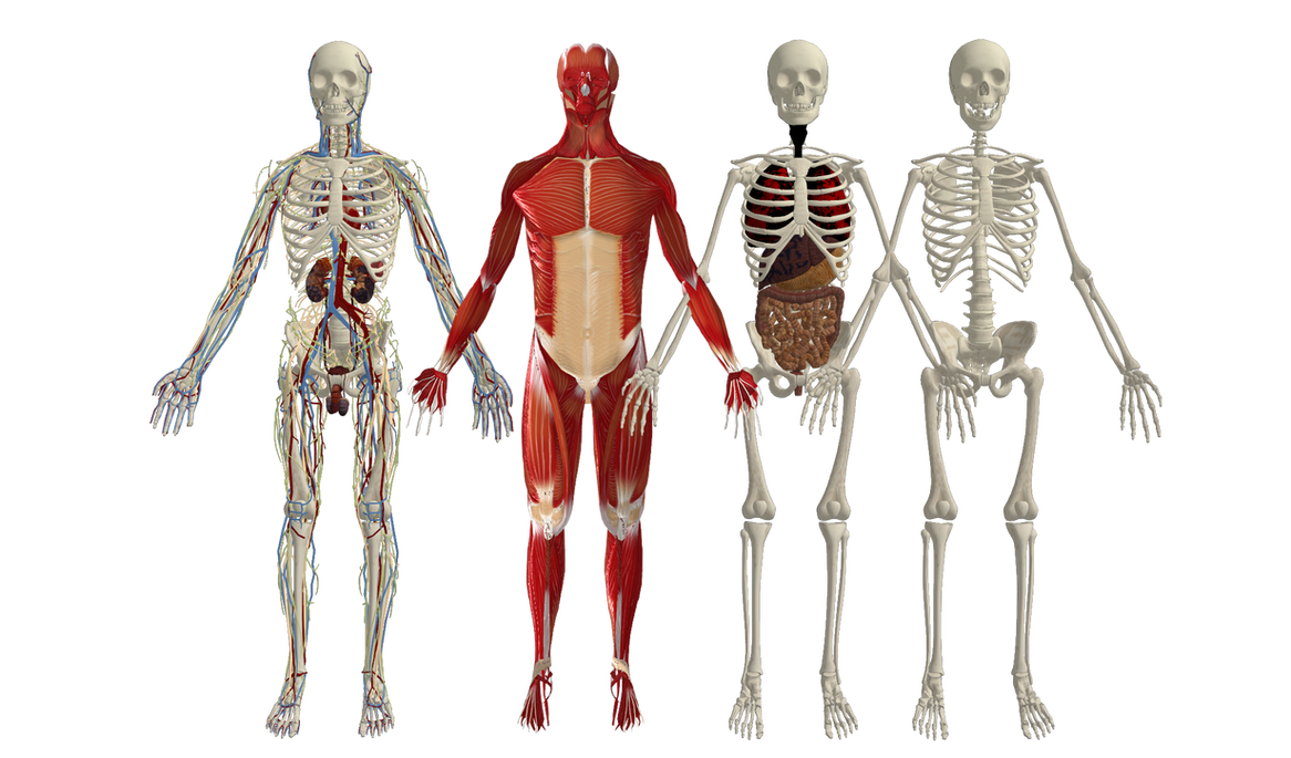 Human Body References In Game Bones By Oo Fil Oo On Deviantart