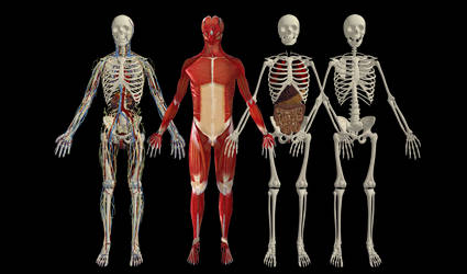 HUMAN BODY REFERENCES IN GAME BONES by Oo-FiL-oO