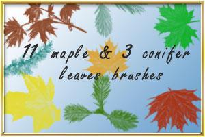 maple_conifer by AnastasieLys