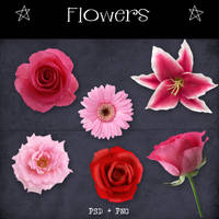 Flowers by Dark-Yarrow
