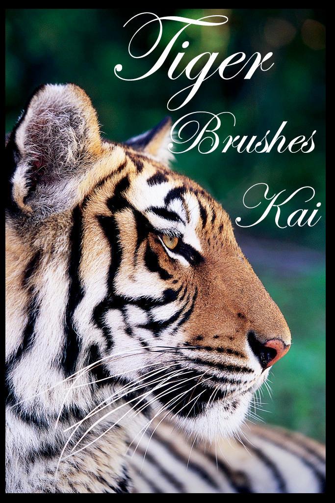 Tiger Brushes by KaiPrincess