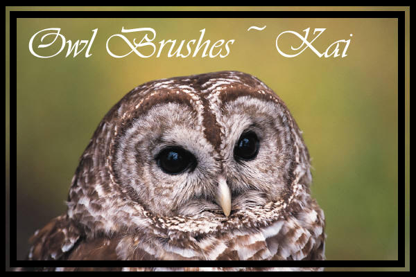 Owl Brushes by KaiPrincess