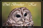 Owl Brushes