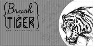 {Brush of Tiger}