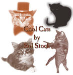 Cool Cats Brushes