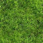 Grass texture (tileable)