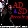 ADSDB HEE
