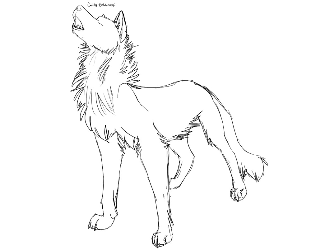 Free wolf lineart read rules by Goldy-Goldenwolf