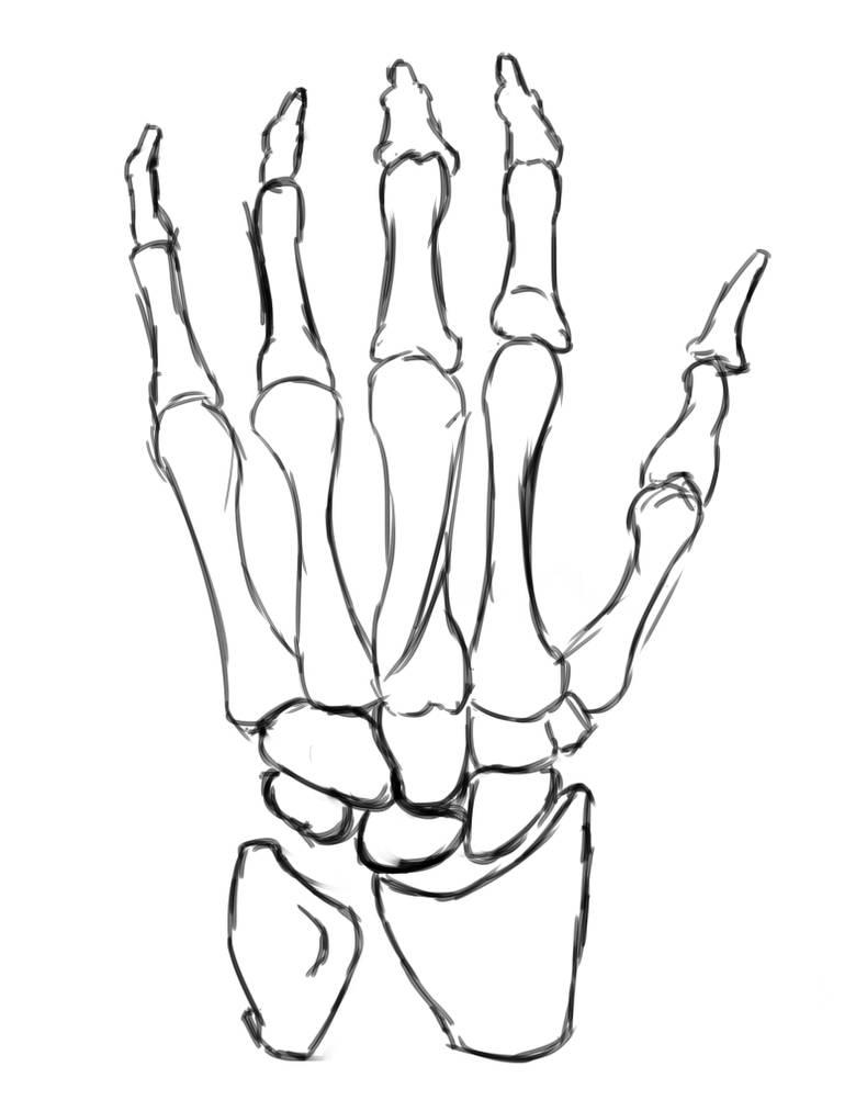 глазки картинка скелет кисти руки правозащитник