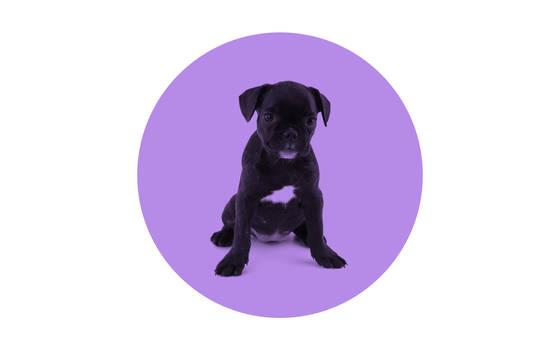 Minimalistic wallpaper, dog