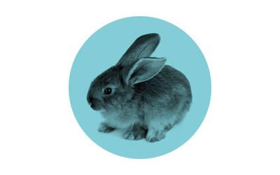 Minimalistic wallpaper, bunny