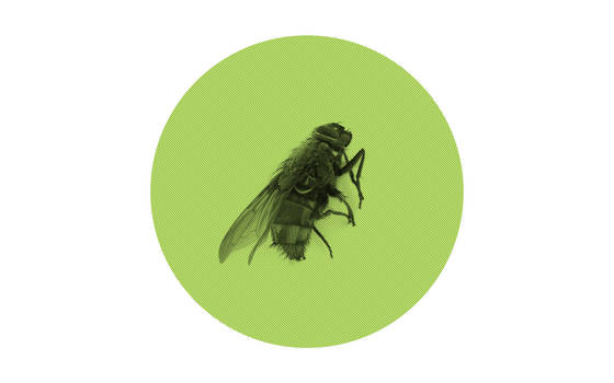 Minimalistic wallpaper, fly