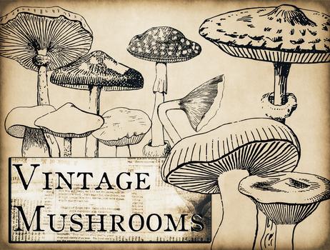 Vintage Mushroom brushes for photoshop (free!)