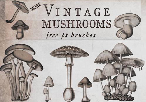 Vintage Mushrooms 2 brushes for photoshop