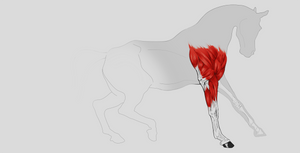 Horse Musculature Study by KennBaker