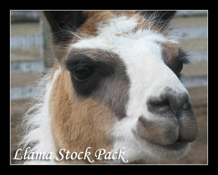 TerrorCookie: Llama Stock Pack by TCJstock
