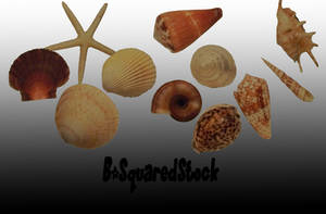 Sea Shells PSD by B-SquaredStock