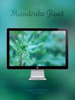 Mandrake Root by YaroManzarek