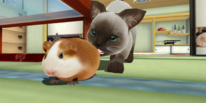 Guinea pig that is not a Hamster .: Download :.