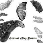 Assorted Wing Brushes