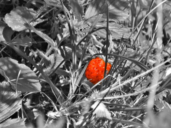 Hidden Strawberry Wallpaper by Untergunter