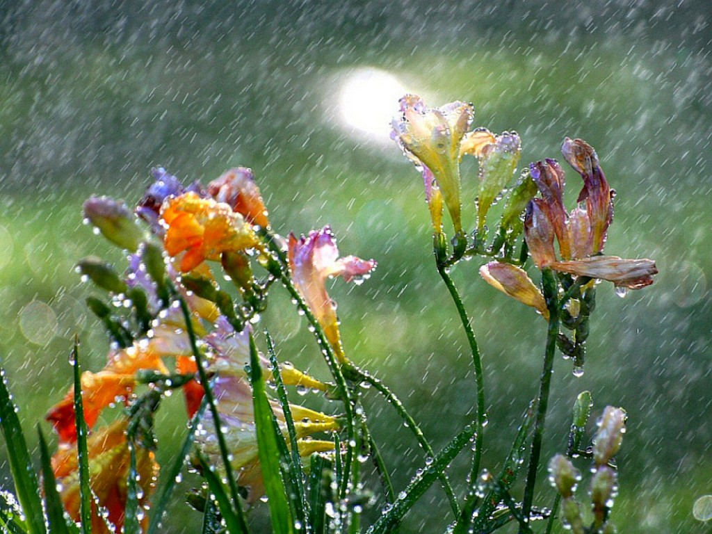 rain showers background summer - photo #10