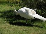White Birds Stock