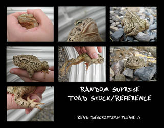 ToadStock2013 by Oddstuffs