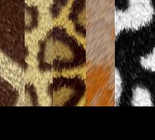 Textures - Animal Fur
