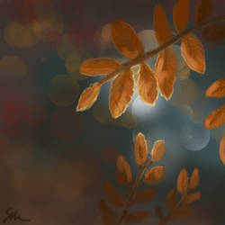 Fall Leaves by Sunlight