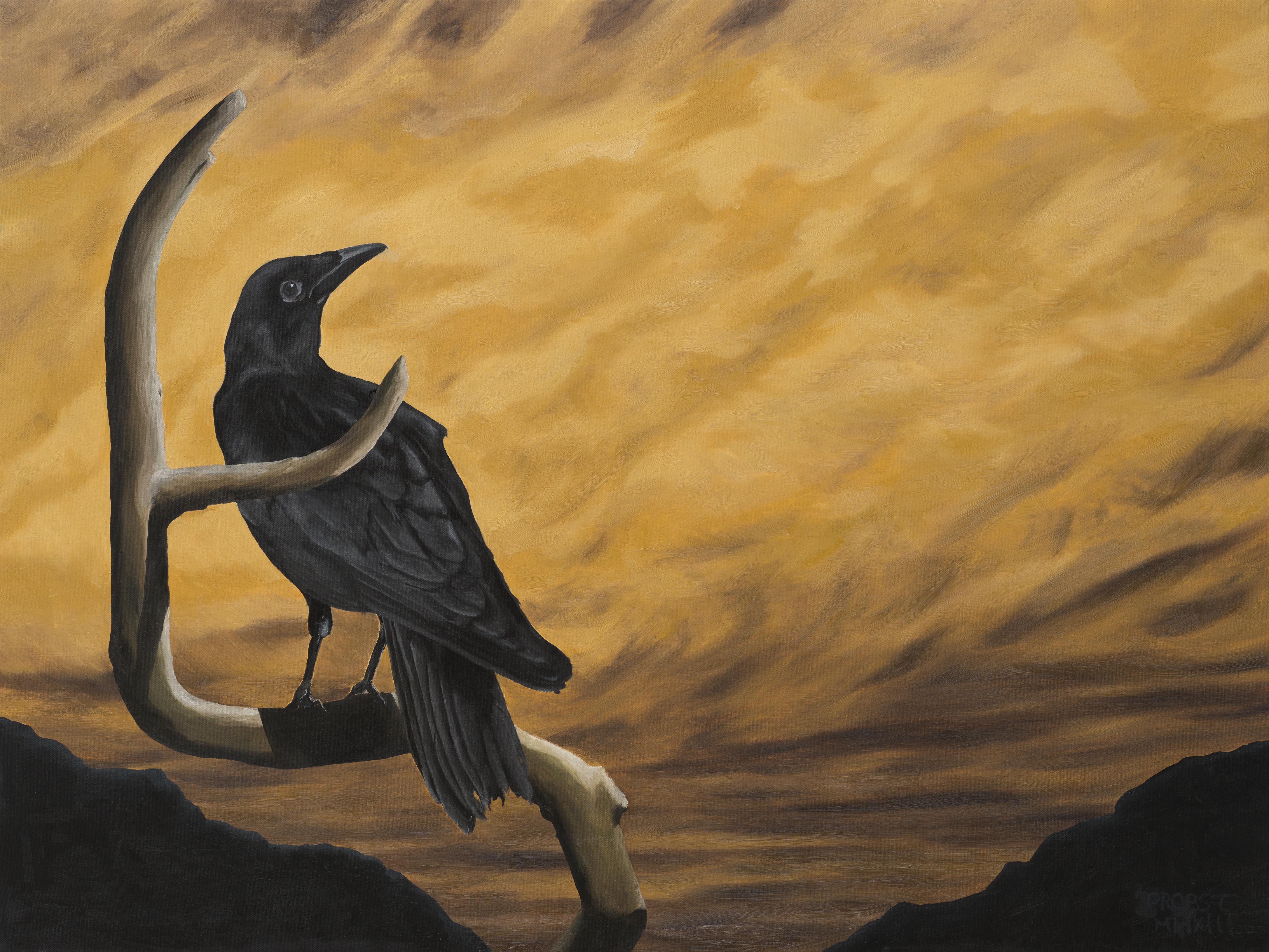 Crow Resting