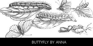 buttyfly