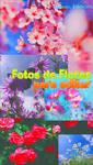 Fotos de Flores -Para Editar-