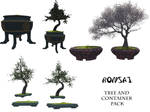 Bonsai tree and container pack