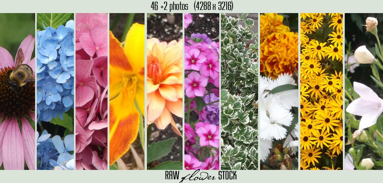 Flower Stock Pack by damilepidus