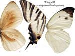 Wings 02 - Transparent BG