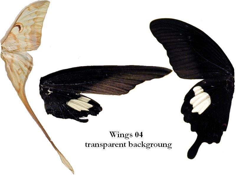 Wings 04 - Transparent BG by DeviantNepStock