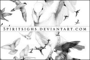 Birds by spiritsighs-stock