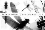 Dragonflies Image Stamps