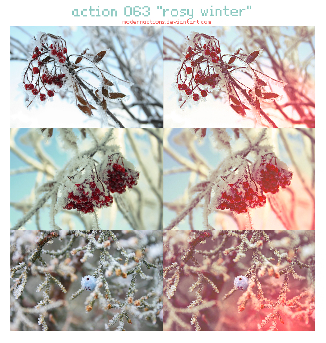 ACTION 063 'ROSY WINTER'