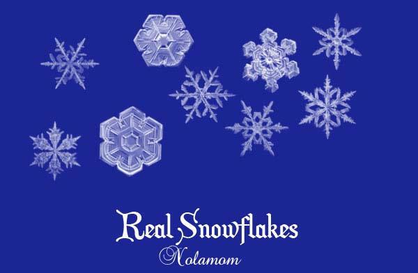 Real Snowflakes by Nolamom3507