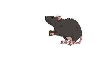 little rat eating