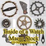 Inside Of A Watch Macro Stock By Horitsu