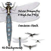 Silver Dragonfly 1 by Comtessa-Stock