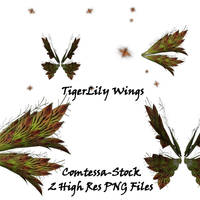 Wings TigerLily by Comtessa-Stock