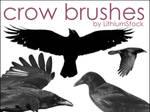 Crow Brushes I